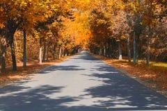 De herfst op de weg Stock Fotografie