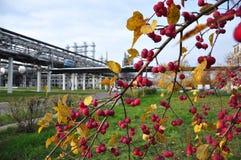 De herfst op een fabriek Stock Foto