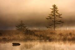 De herfst op een moeras in de Vogezen-berg Stock Foto's
