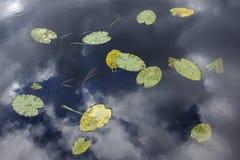 De herfst op een vijver Stock Fotografie