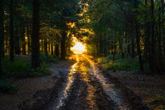 De herfst op Gemeenschappelijke Woodbury, Devon Royalty-vrije Stock Afbeelding