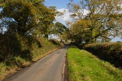 De herfst op Gemeenschappelijke Woodbury, Devon Stock Foto's