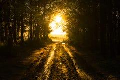 De herfst op Gemeenschappelijke Woodbury, Devon Royalty-vrije Stock Foto's