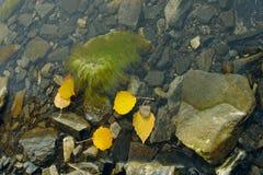 De herfst op het eiland Stock Afbeeldingen