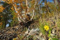 De herfst op het eiland Royalty-vrije Stock Foto