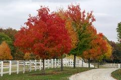 De herfst op het landbouwbedrijf Stock Foto