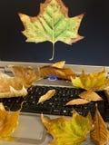 De herfst op Internet Royalty-vrije Stock Foto