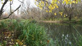 De herfst op rivier stock footage