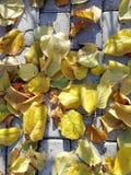 de herfst op de stoep stock afbeeldingen