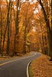 De herfst op two-lane weg Stock Afbeelding