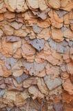 De herfst oranje bladeren van de groep Royalty-vrije Stock Foto