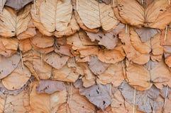 De herfst oranje bladeren van de groep Royalty-vrije Stock Afbeeldingen