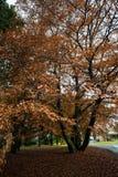 De herfst in Oslo Royalty-vrije Stock Afbeeldingen