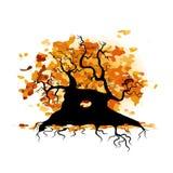 De herfst oude boom met wortels voor uw ontwerp Stock Foto's