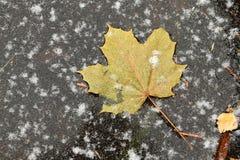 De herfst is over stock foto's