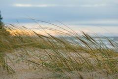 De herfst in Palanga-Duinen met Oostzee op achtergrond en sluit omhoog van onkruid Royalty-vrije Stock Foto's