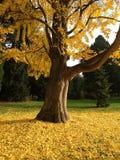 De herfst in Parijs Royalty-vrije Stock Afbeelding