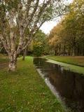 De herfst in park Royalty-vrije Stock Afbeeldingen