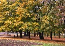De herfst in park Stock Afbeeldingen