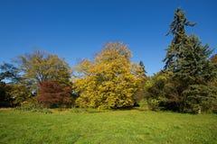 De herfst in park Stock Fotografie