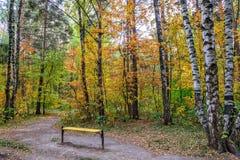De herfst in park Royalty-vrije Stock Fotografie