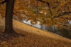 De herfst in park Stock Foto's