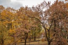 De herfst in park Stock Foto