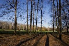 De herfst in park Royalty-vrije Stock Foto