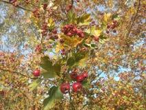 De herfst in Polen Stock Afbeelding