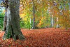 De herfst in Powerscourt Royalty-vrije Stock Afbeeldingen