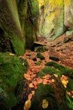 De herfst in Prachov-rotsen stock foto's