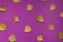 De herfst purpere achtergrond met gele dalingsbladeren Stock Foto