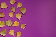 De herfst purpere achtergrond met gele dalingsbladeren Royalty-vrije Stock Afbeeldingen