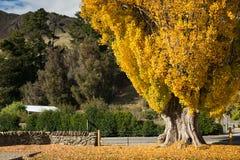 De herfst in Queenstown, Nieuw Zeeland Royalty-vrije Stock Afbeelding