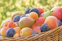 De herfst is rijk aan vruchten Stock Afbeelding