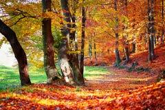 De herfst rode gekleurde bomen en gevallen bladeren stock afbeelding