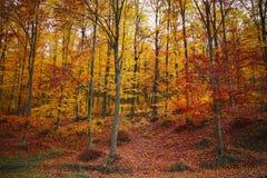 De herfst rode kleuren royalty-vrije stock afbeelding