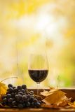 De herfst rode wijn Stock Foto