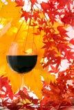 De herfst. Rode Wijn Stock Foto's