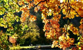 De herfst Romaans in park royalty-vrije stock foto