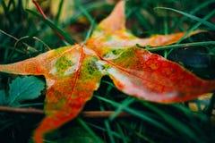 De herfst rood blad Royalty-vrije Stock Afbeelding