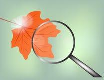 De herfst rood blad met loupe Stock Afbeelding