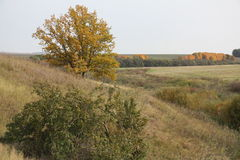 De herfst Russische gebieden Royalty-vrije Stock Foto