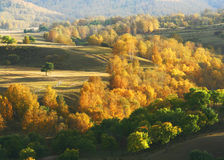 De herfst in Saihanba Stock Afbeeldingen