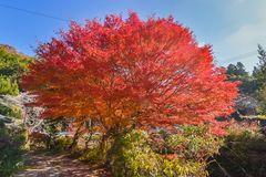 De herfst sason brengt levende het leven Stock Foto's