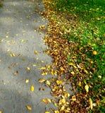 De herfst seaon komt Stock Foto's