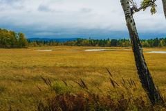 De herfst in Siberië Stock Afbeelding