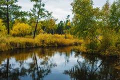 De herfst in Siberië Royalty-vrije Stock Afbeeldingen