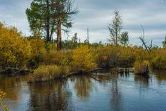 De herfst in Siberië Royalty-vrije Stock Afbeelding