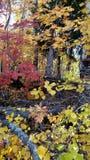 De herfst in Siberische taiga Foto's van een mobiele telefoon stock foto's